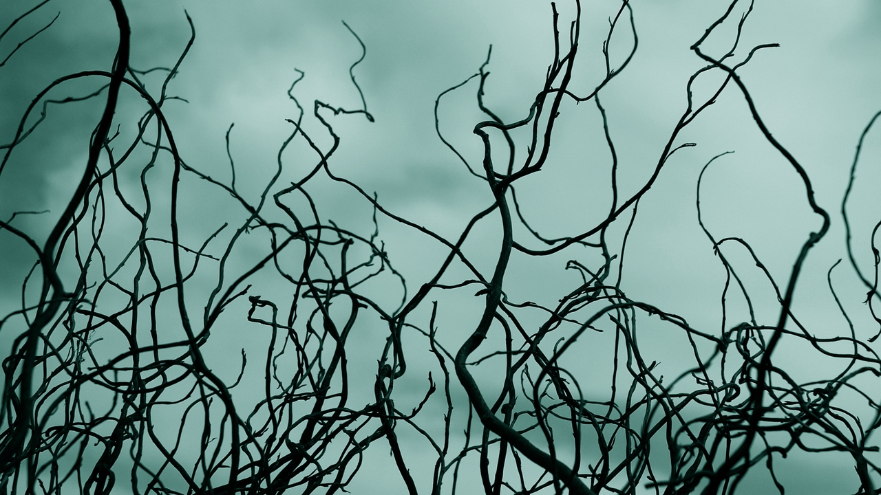 Preview wallpaper branches, clouds, outlines, sky