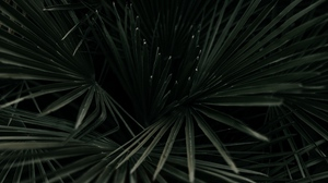 Preview wallpaper branches, dark green, leaves, palm, plant, tropical