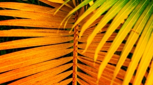 Preview wallpaper branch, bright, leaves, palm, saturated, yellow