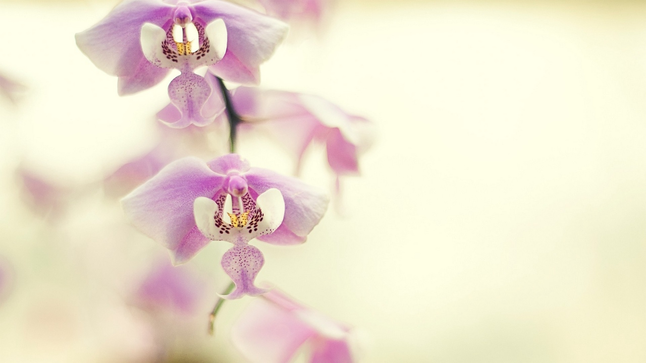 Preview wallpaper branch, flower, orchid, plant