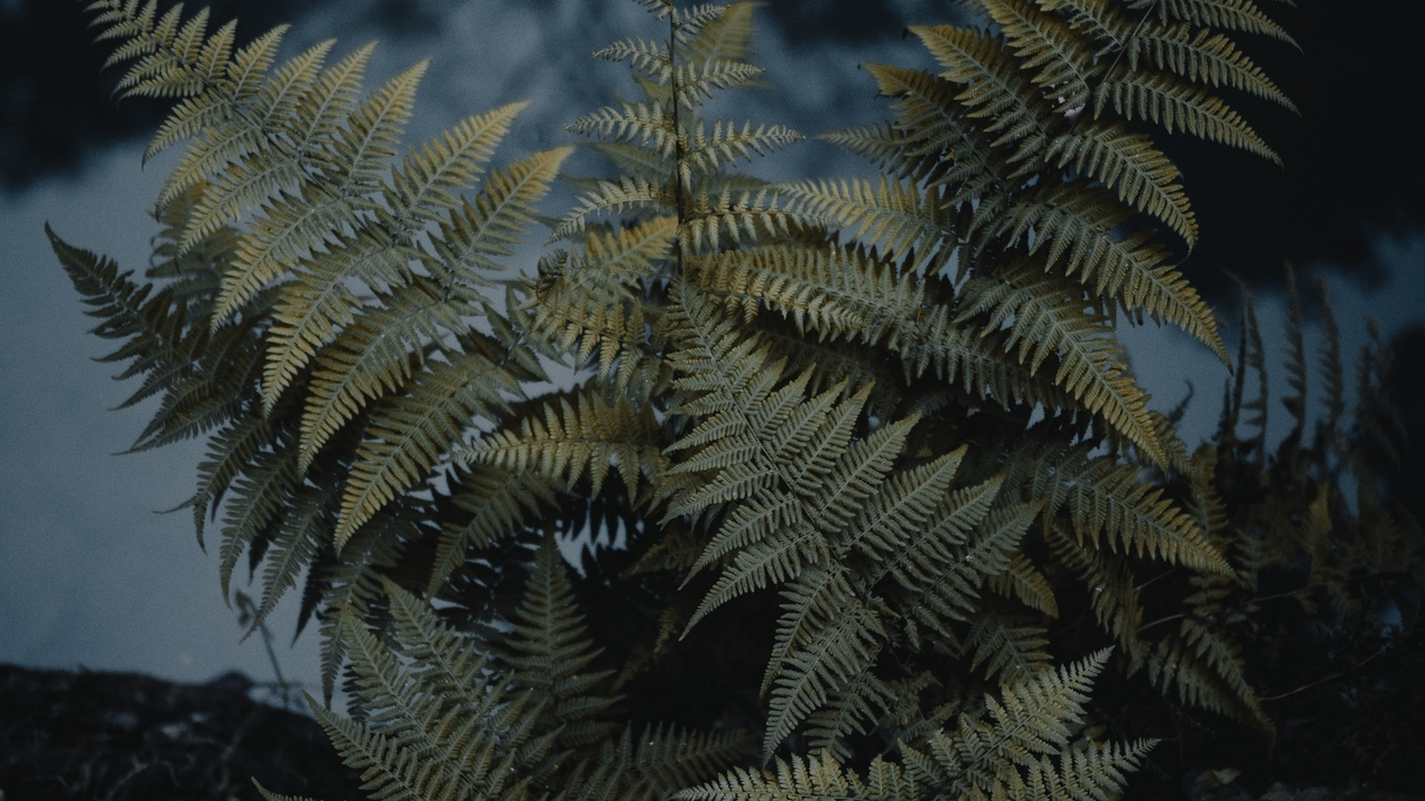 Preview wallpaper fern, green, nature, plant, wild