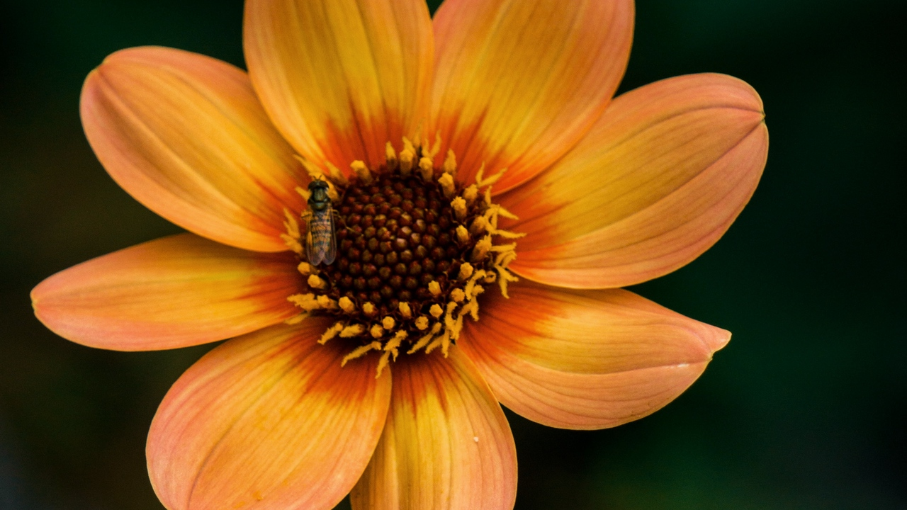 Preview wallpaper bloom, flower, insect, plant