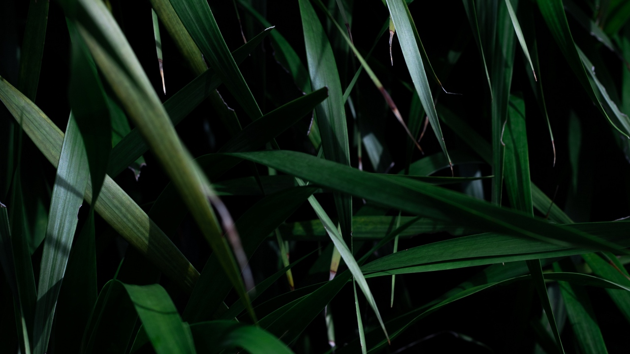 Preview wallpaper grass, leaves, plant, shadow