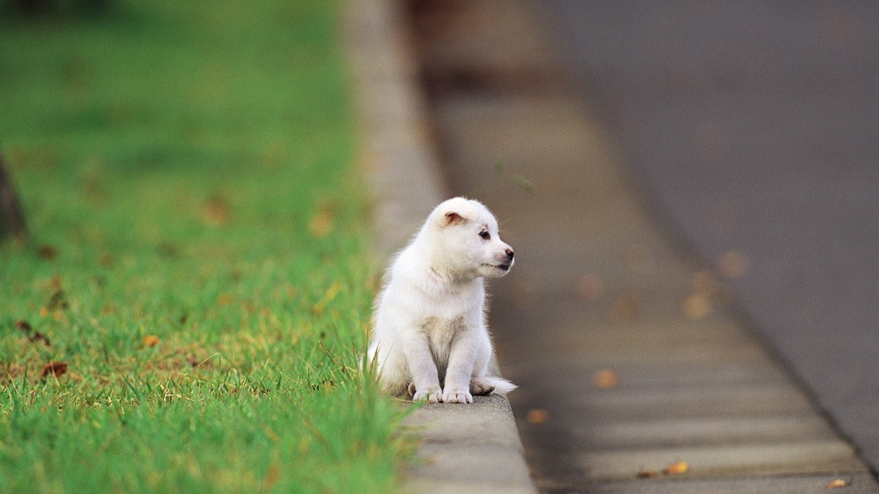 Preview wallpaper baby, puppy, road, sitting