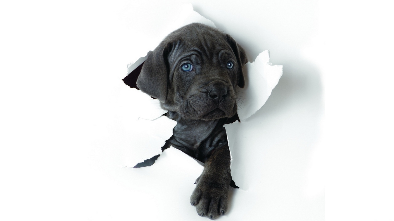 Preview wallpaper dog, muzzle, paper, puppy, ragged