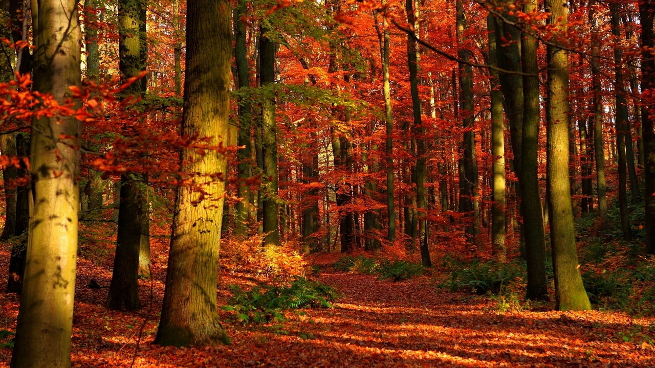 Preview wallpaper autumn, gleams, leaves, red, trees, wood
