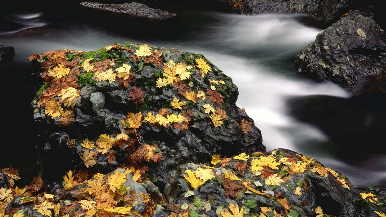 Preview wallpaper autumn, leaves, moss, river, stones