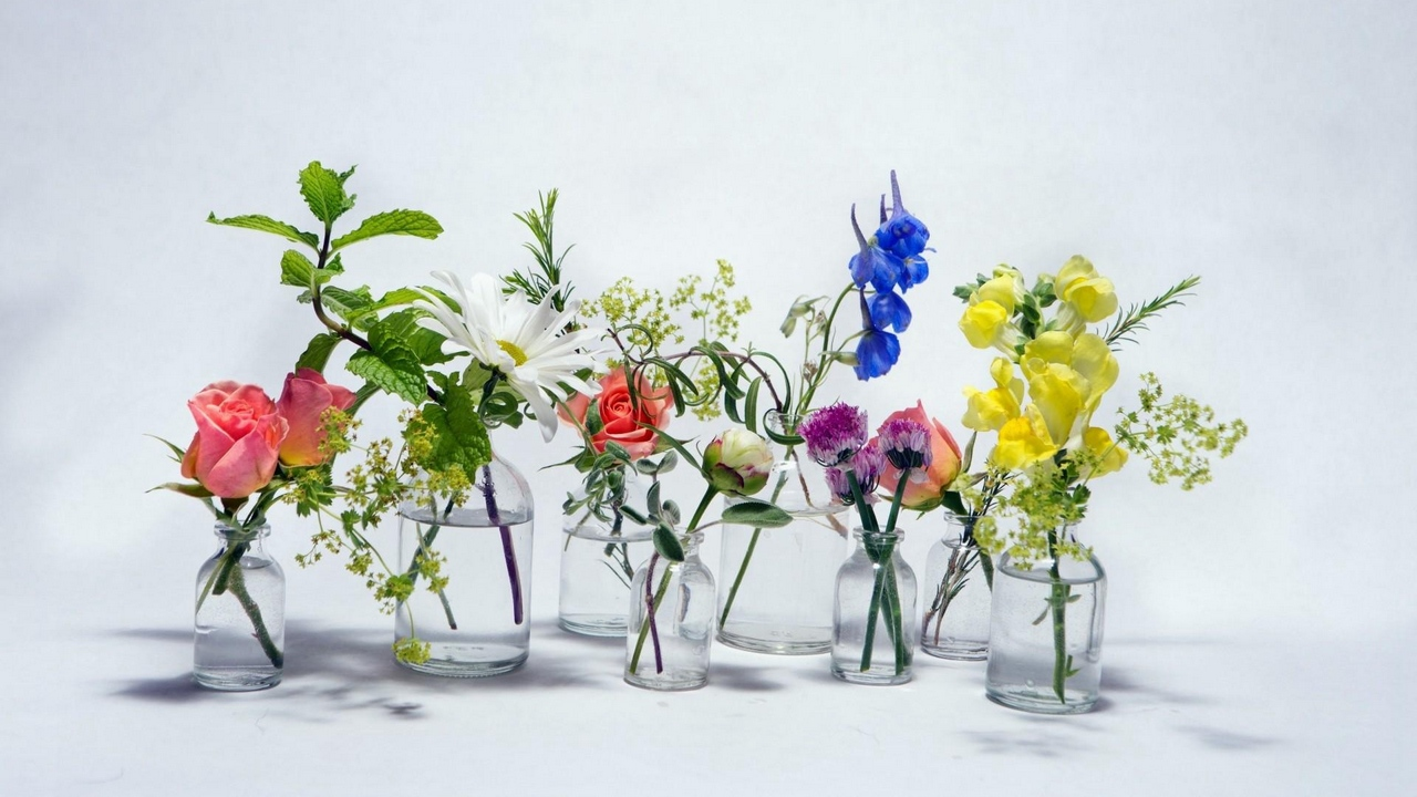 Preview wallpaper bluebells, chamomile, flowers, jars, rose, water