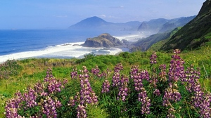 Preview wallpaper coast, flowers, greens, mountains, sea, waves
