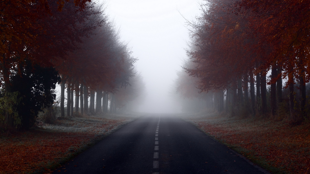 Preview wallpaper fog, road, signs, trees