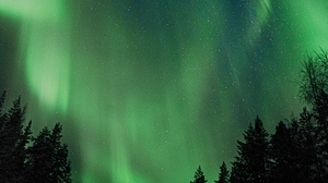 Preview wallpaper aurora, night, northern lights, sky, trees