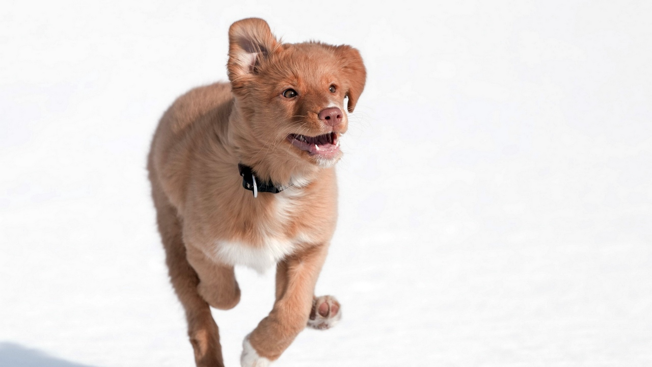 Preview wallpaper dogs, happiness, running, snow, speed