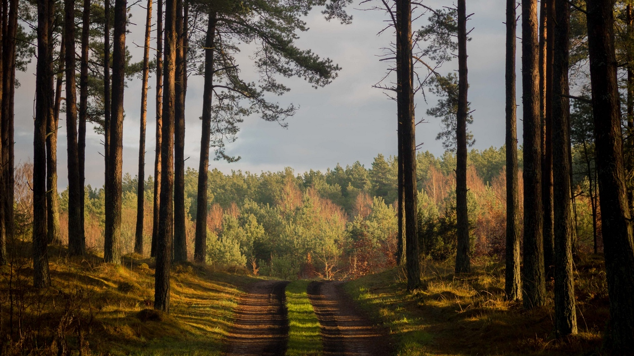 Preview wallpaper denmark, forest, path, summer, trees