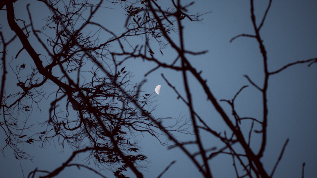 Preview wallpaper branches, moon, sky, sunset, tree