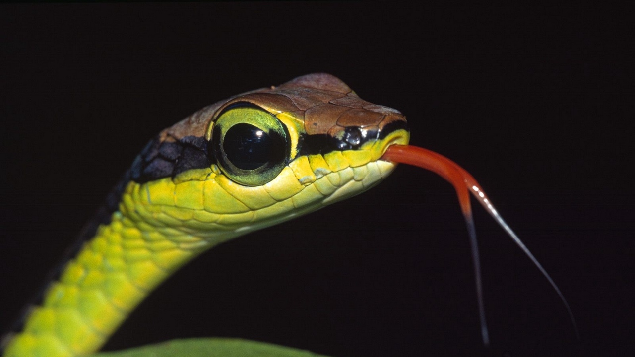 Preview wallpaper grass, leaves, snake, tongue, young