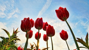 Preview wallpaper clouds, flowers, grass, sky, sun, trees, tulips