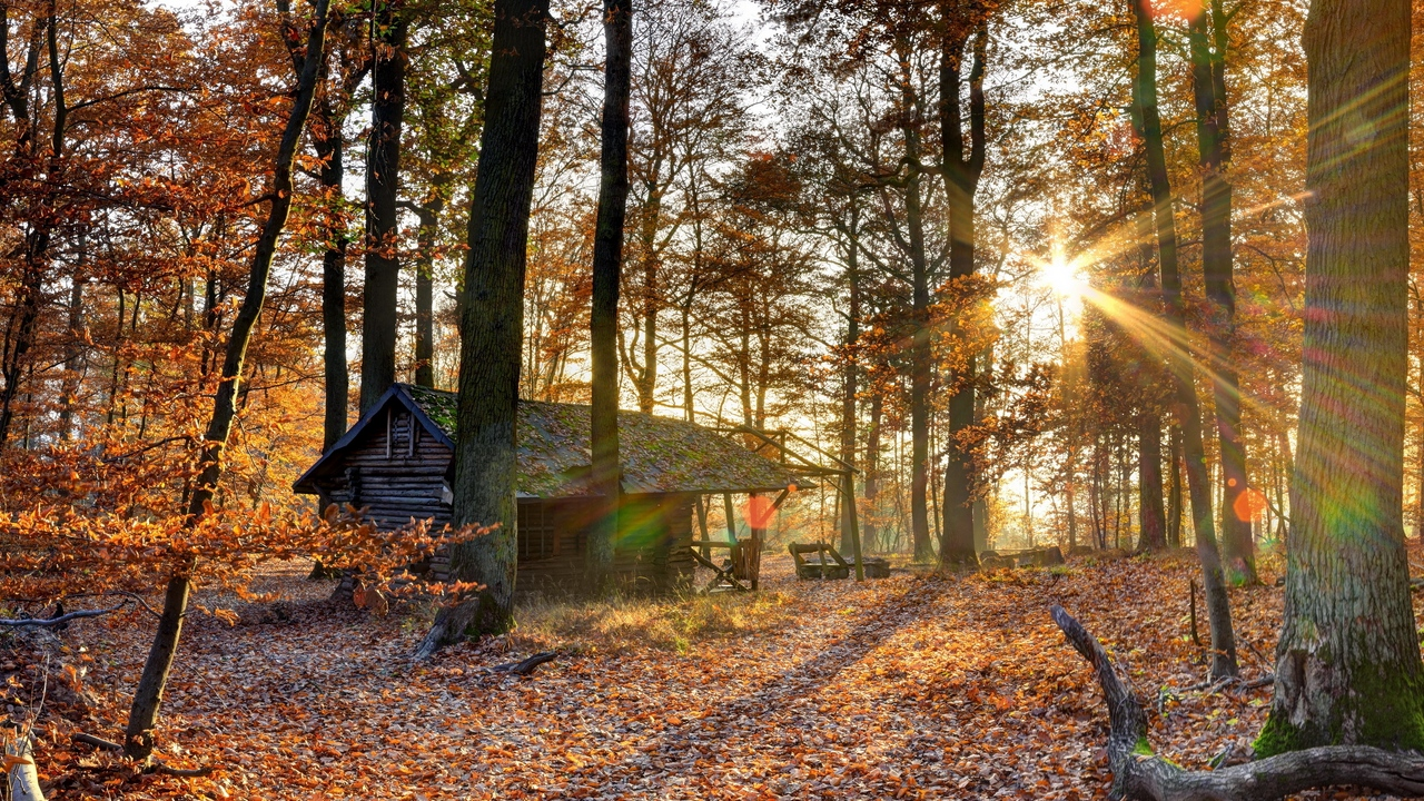 Preview wallpaper autumn, falling leaves, forest, house, light, october, trees