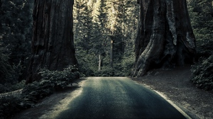Preview wallpaper forest, nature, road, sequoias, trees