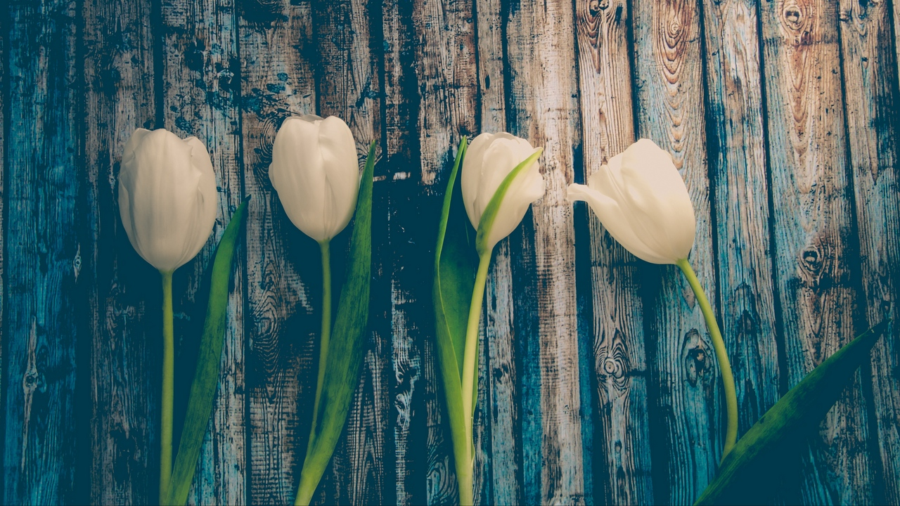 Preview wallpaper flowers, stem, tulips