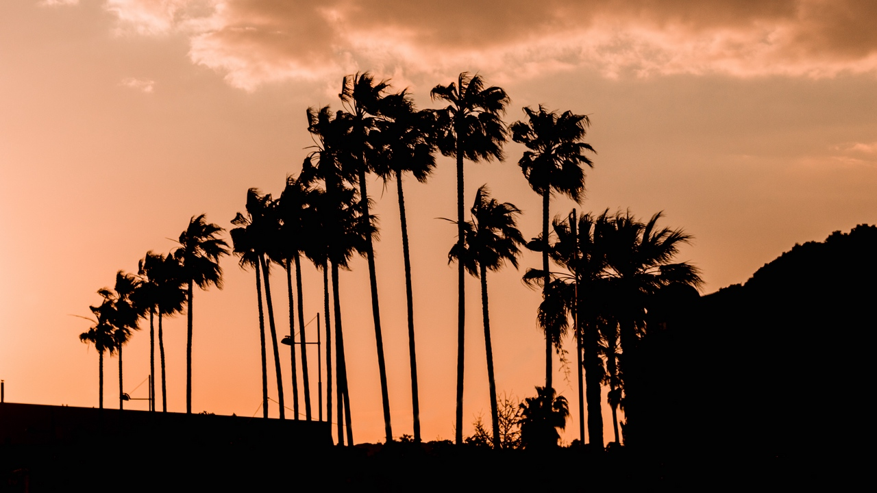 Preview wallpaper clouds, dark, outlines, palm trees, sky, twilight