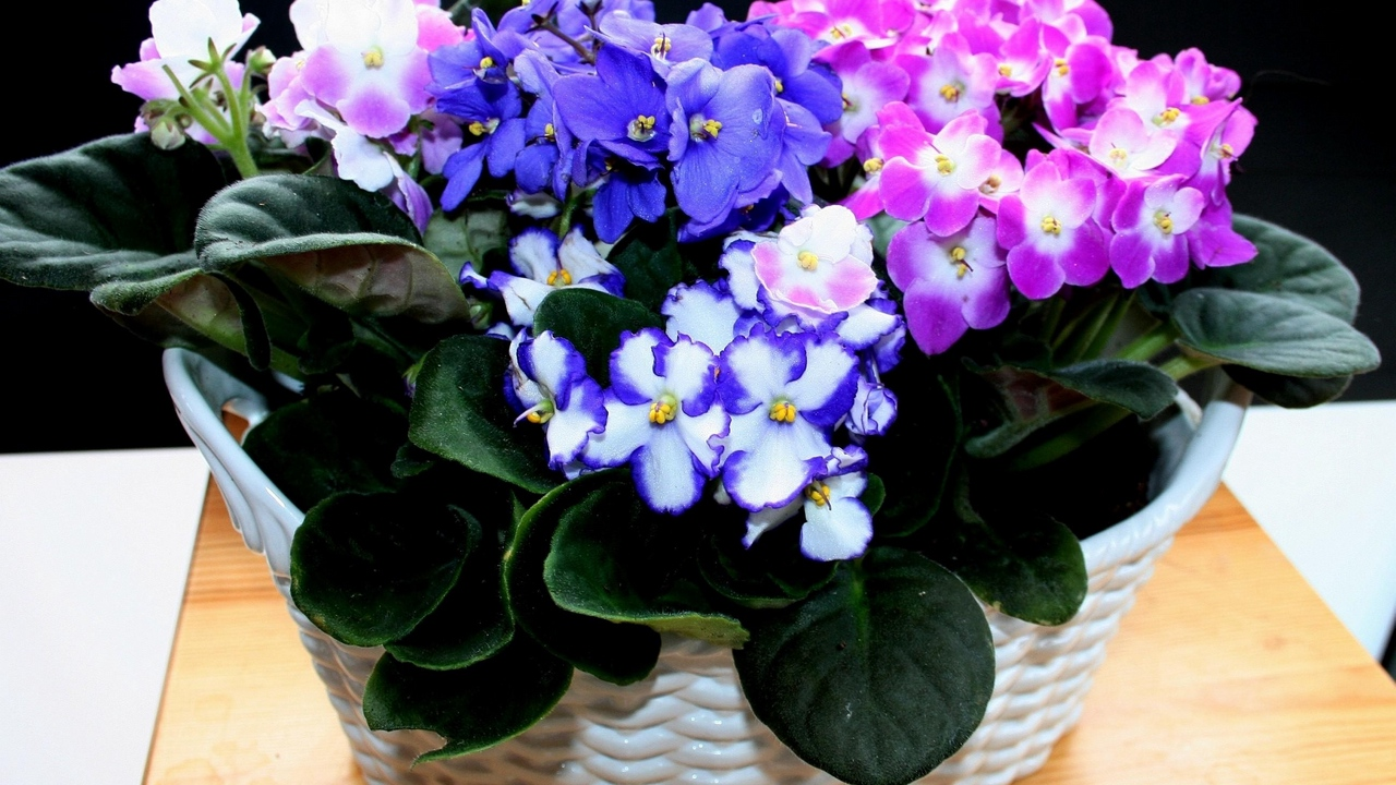 Preview wallpaper colorful, flowers, indoor, violets