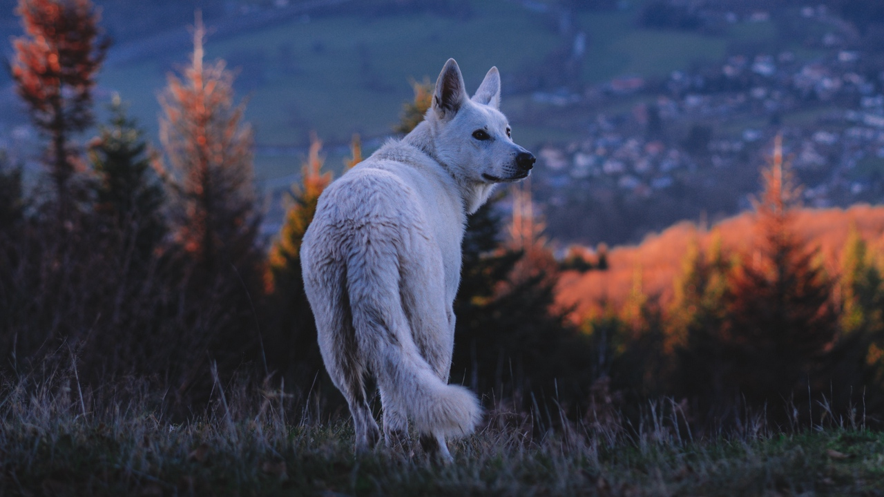 Preview wallpaper dog, nature, pet, white