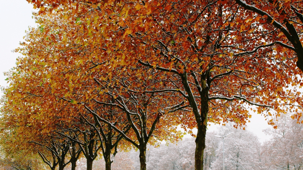 Preview wallpaper autumn, leaves, trees, winter