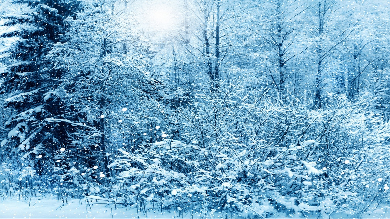 Preview wallpaper snow, trees, winter