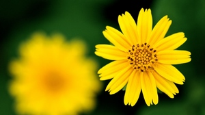 Preview wallpaper blurred, flower, petals, white, yellow