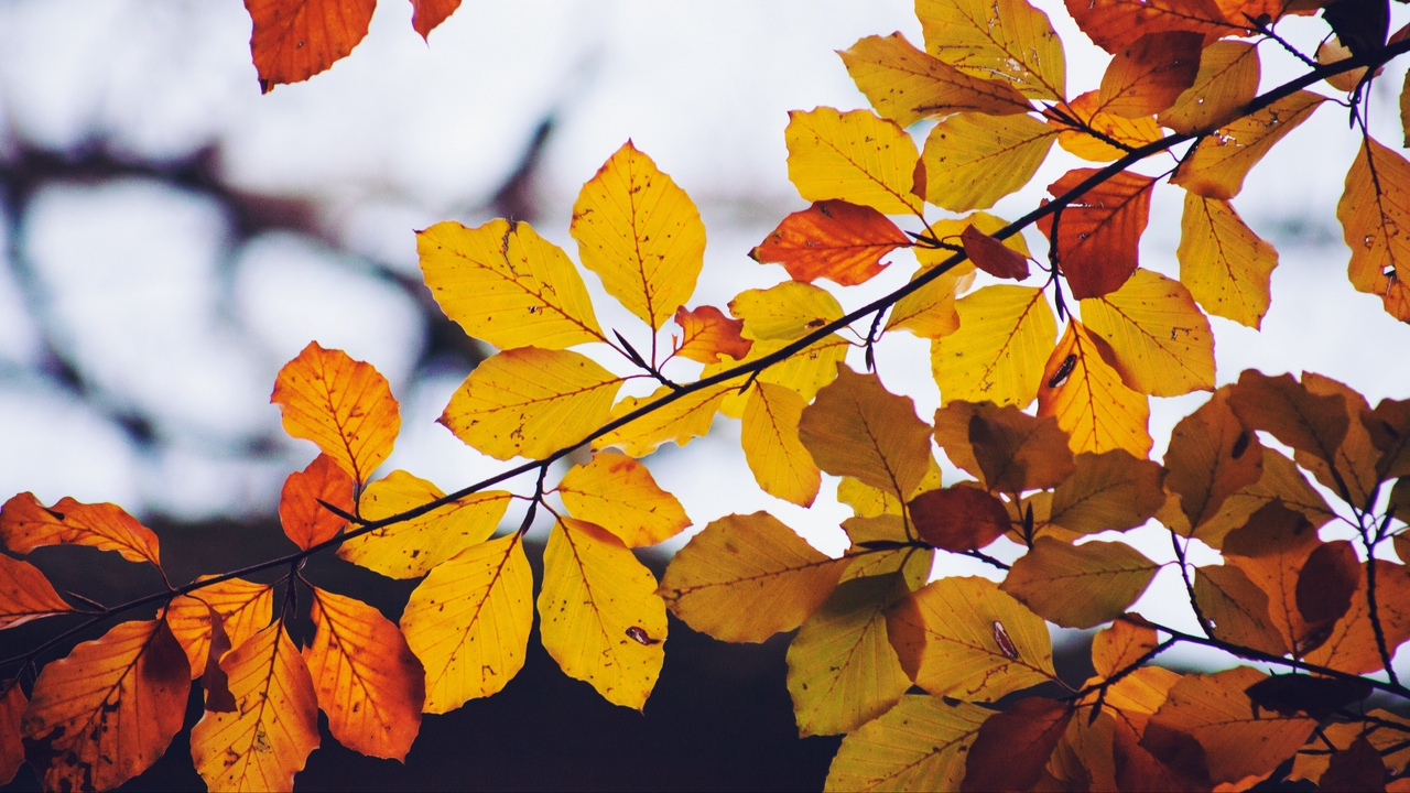 Preview wallpaper autumn, branch, dry, leaves, yellow
