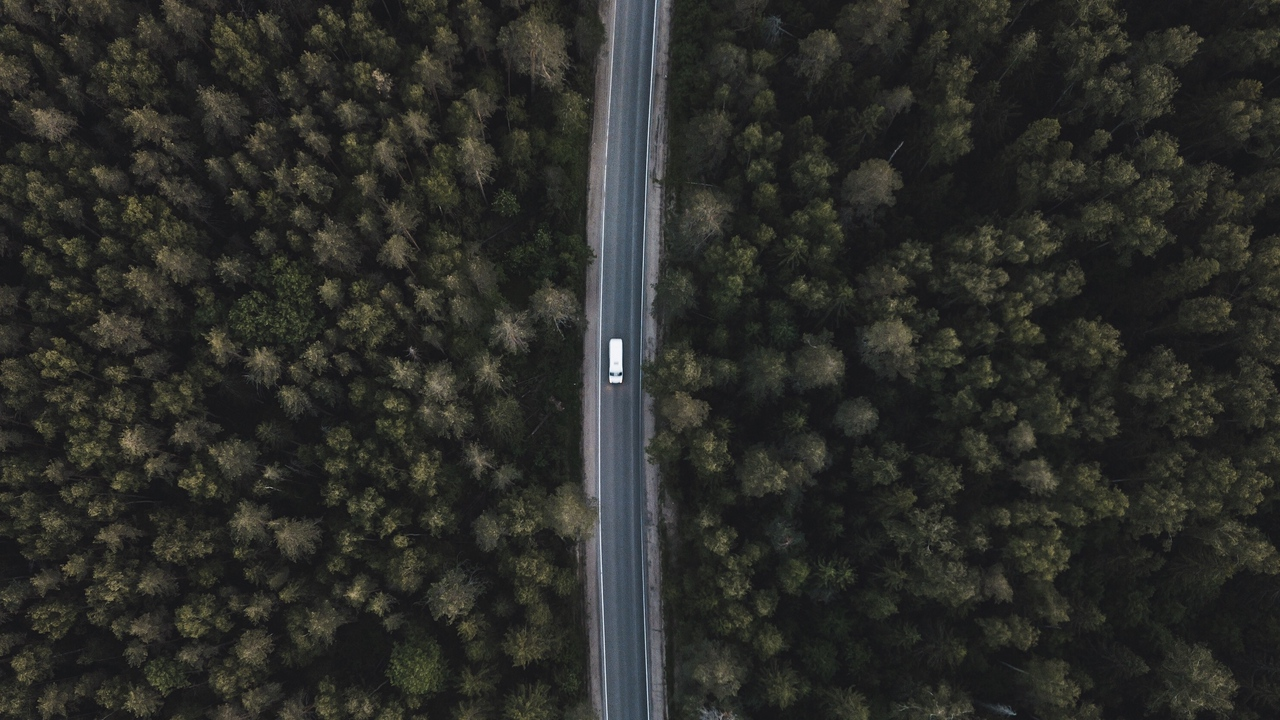 aerial view tops road trees forest
