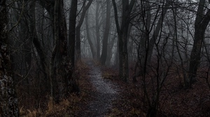 Preview wallpaper autumn, fog, forest, path