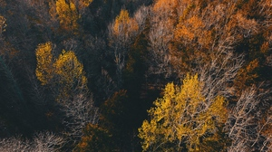 Preview wallpaper autumn, trees, view from above