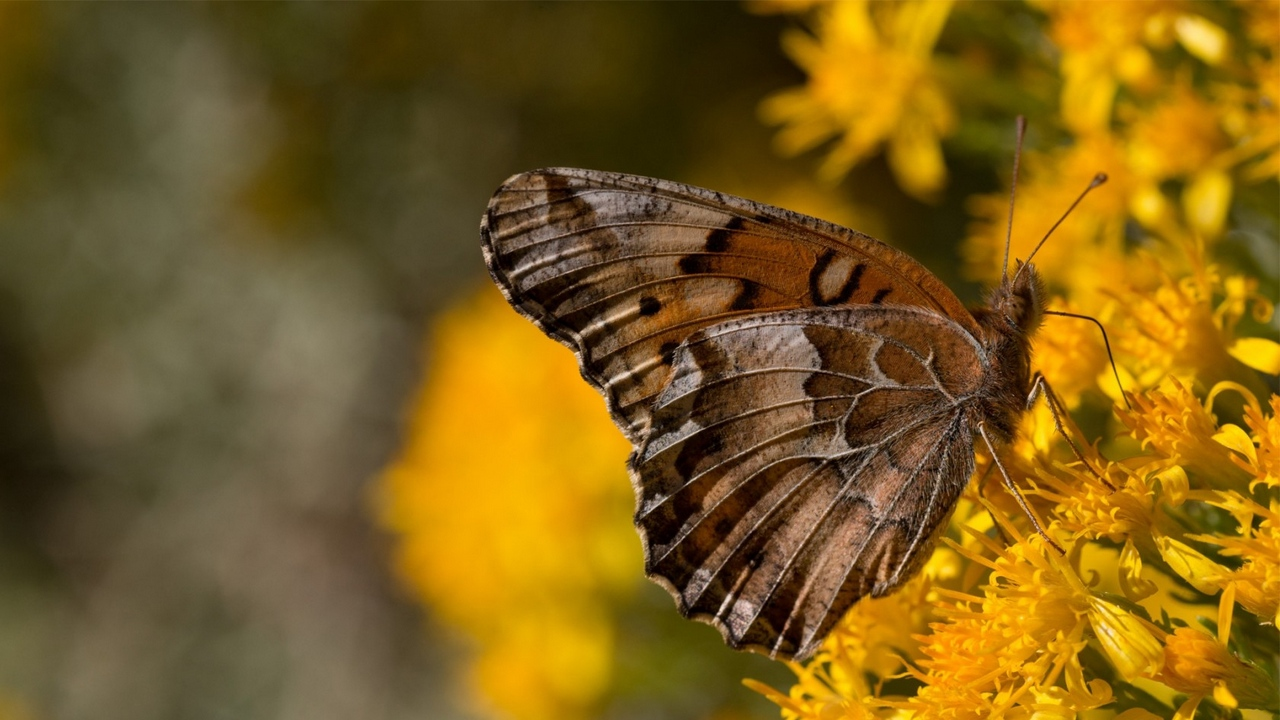 background butterfly flowers wings yellow