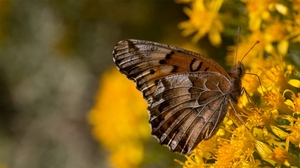 Preview wallpaper background, butterfly, flowers, wings, yellow