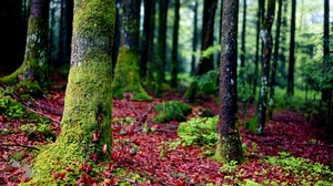 Preview wallpaper bark, forest, moss, trees