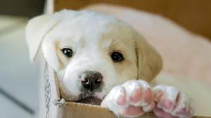Preview wallpaper box, dog, puppy