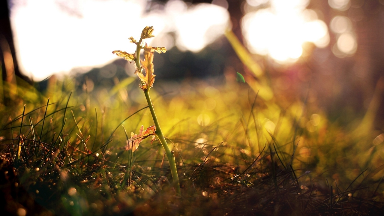 branches fall shoot grass leaves