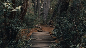 Preview wallpaper bridge, forest, nature, path, trees