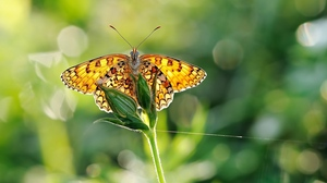 Preview wallpaper butterfly, grass, plant
