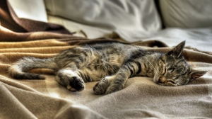 Preview wallpaper cat, plaid, sleeping, striped
