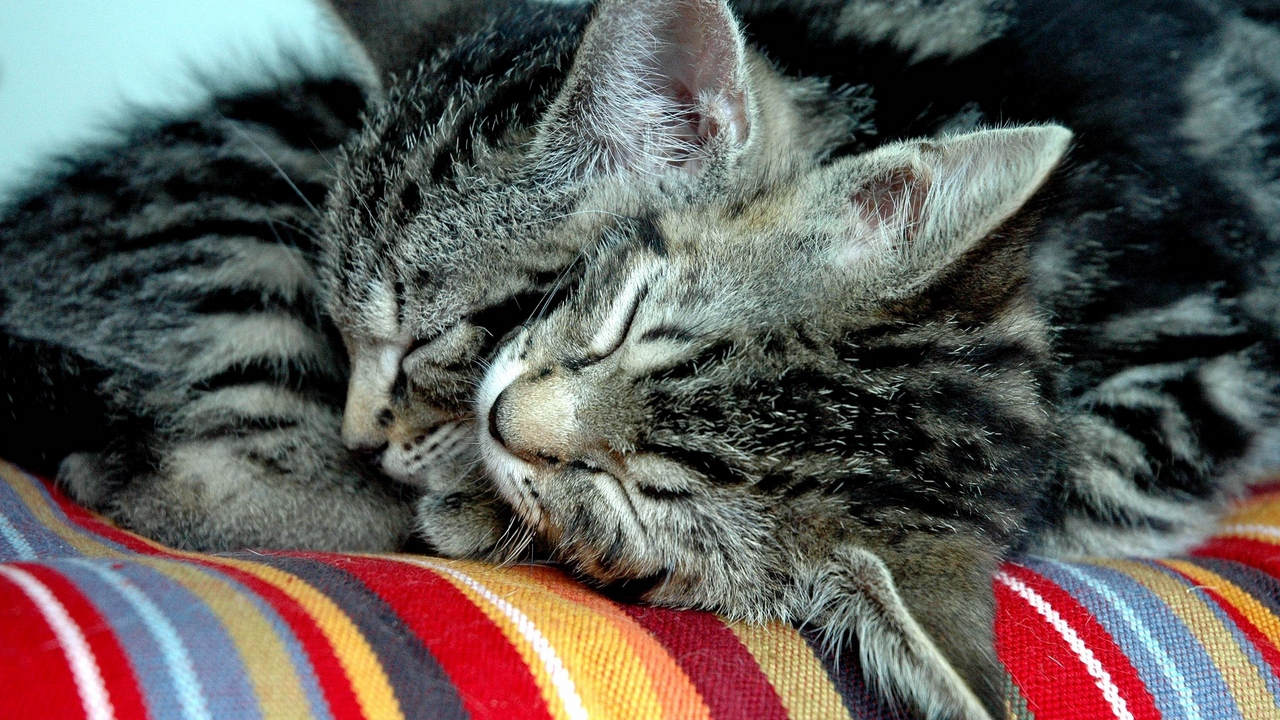 cats down tenderness couple
