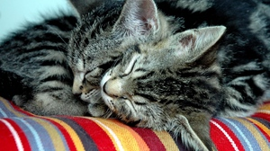 Preview wallpaper cats, couple, down, tenderness