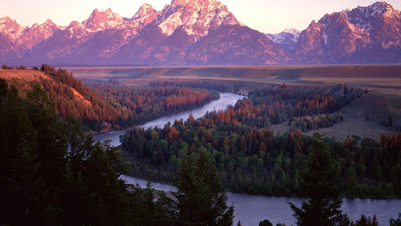 coniferous trees bends river mountains