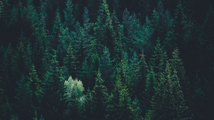 Preview wallpaper dark, forest, top view, trees