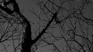 Preview wallpaper branches, bw, dark, tree