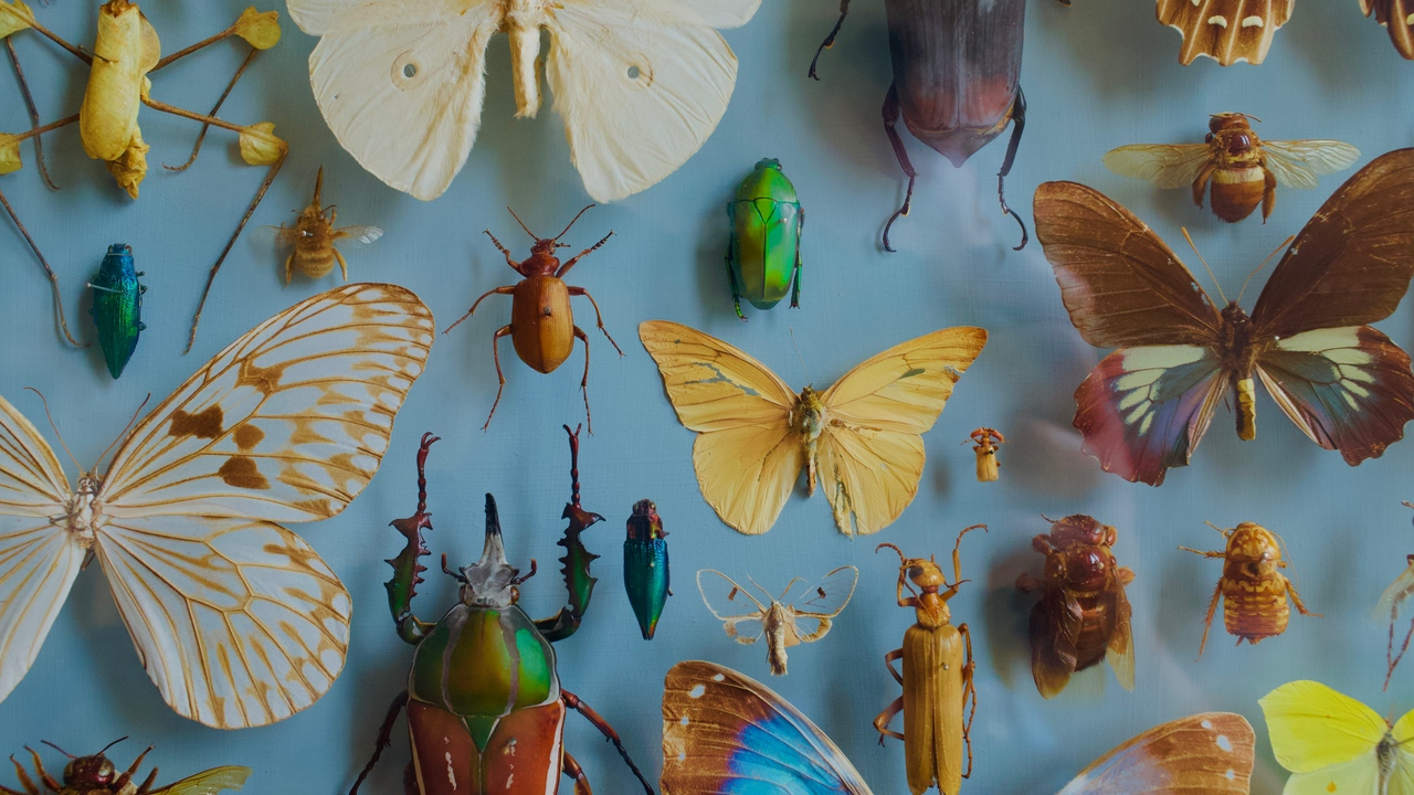 decoration insects butterflies collection beetles