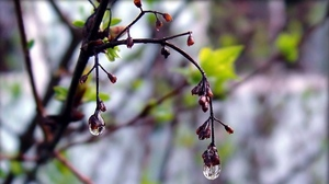 Preview wallpaper drops, plant, spring, tree