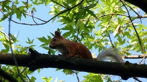 Preview wallpaper animal, face, sitting, squirrel