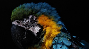 Preview wallpaper birds, feathers, parrot